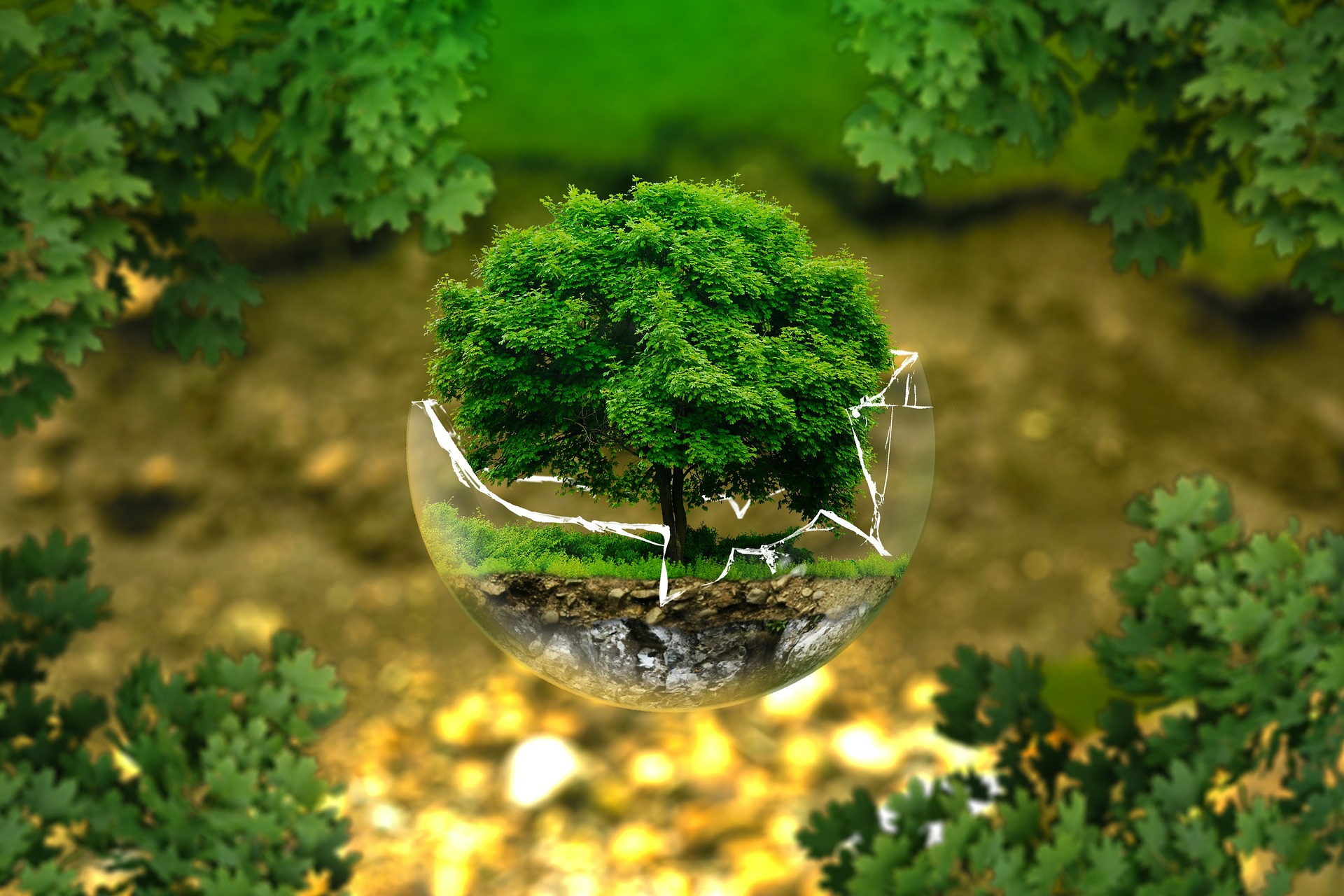 """Tree in broken glass ball outdoor illustrating project """"Save the Planet for Youth""""."""